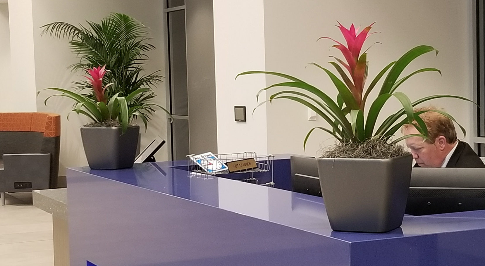 Plants in Office Lobby